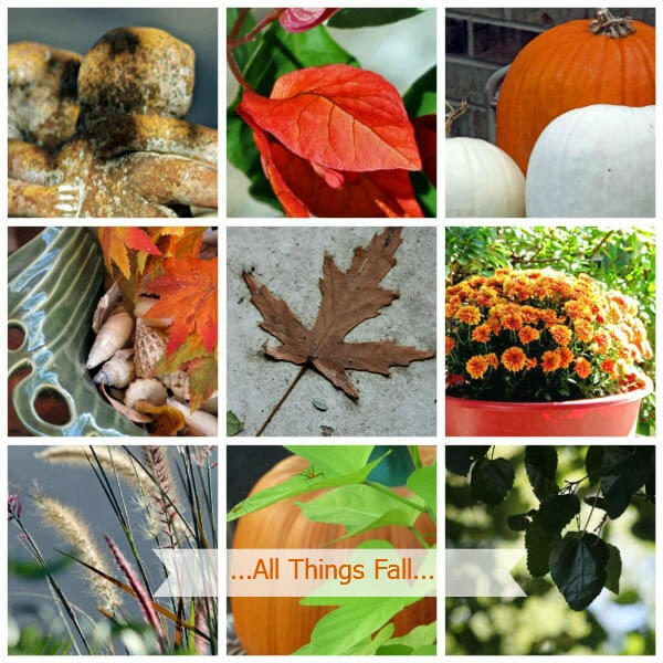 A collage of fall photos