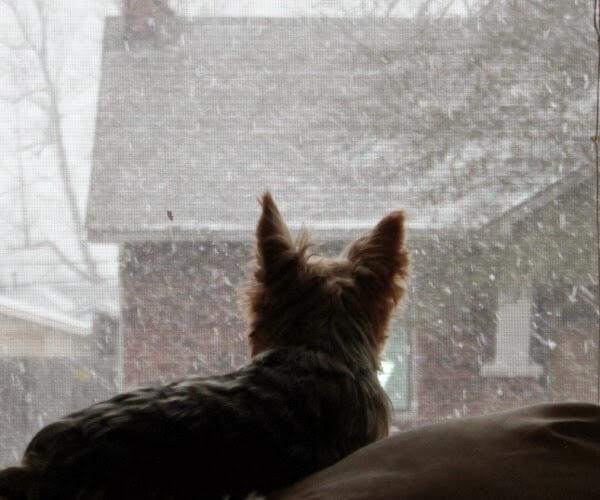 Snow Has Begun To Fall