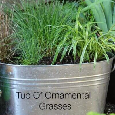 Try A Container Of Ornamental Grasses