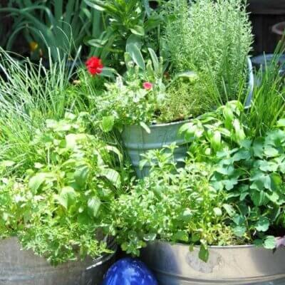 Important Elements In Your Garden