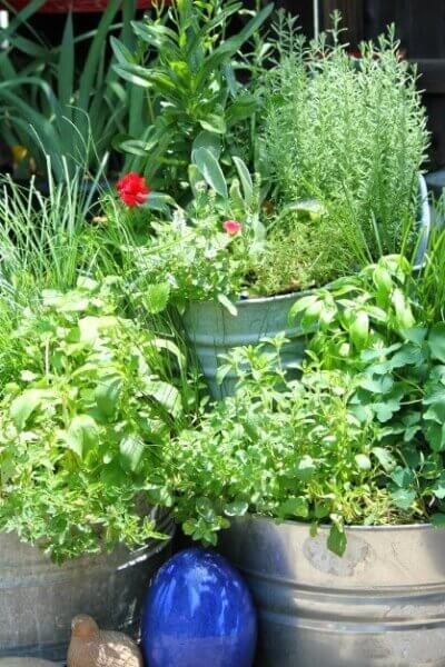 Important Elements In Your Garden