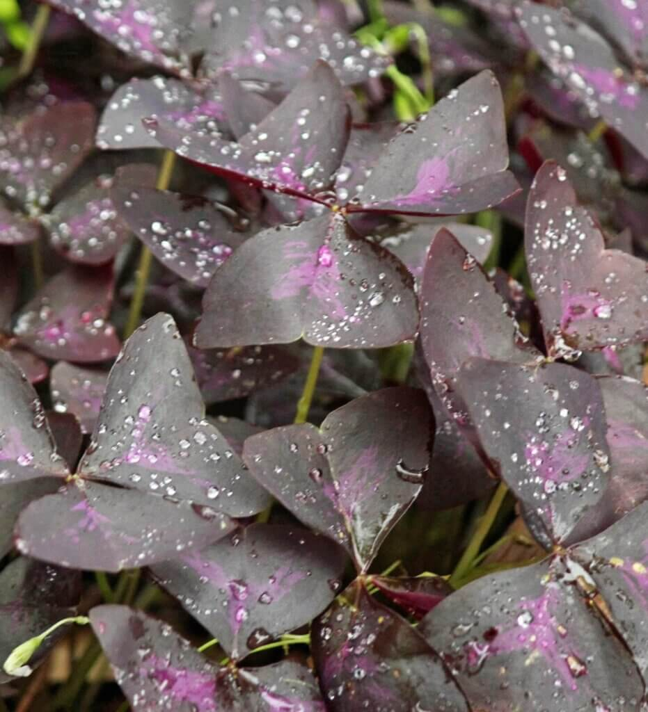 Shades Of Purple & Dappled Green