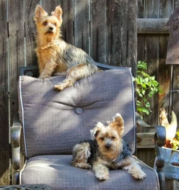 Good Books & (Non) Barking Dogs