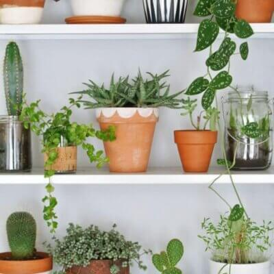 Incorporating House Plants Into Your Decor