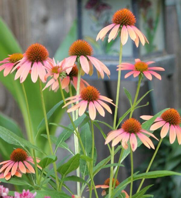 July Garden Blooms