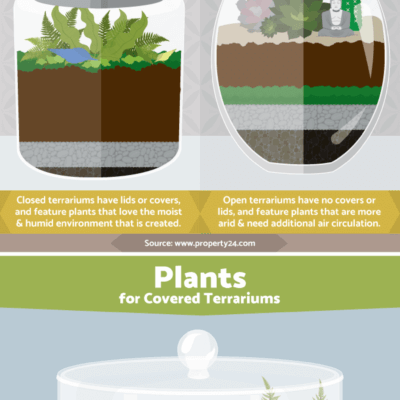 Cold Weather Gardening: Terrariums
