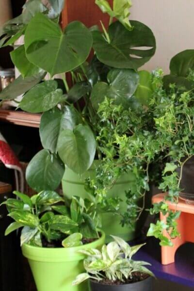 Spring Planting Chores