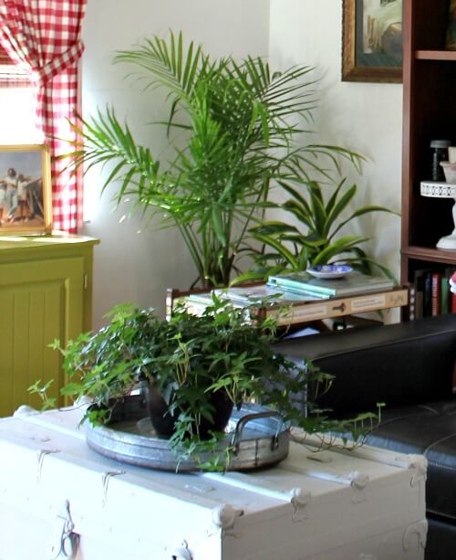 Adding House Plants To Your Living Space