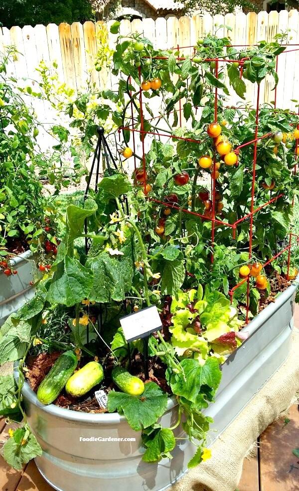 Patio Gardening 101