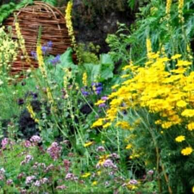 5 Tips For All Natural Gardening