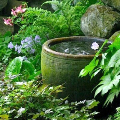 Fundamentals Of Water Gardening