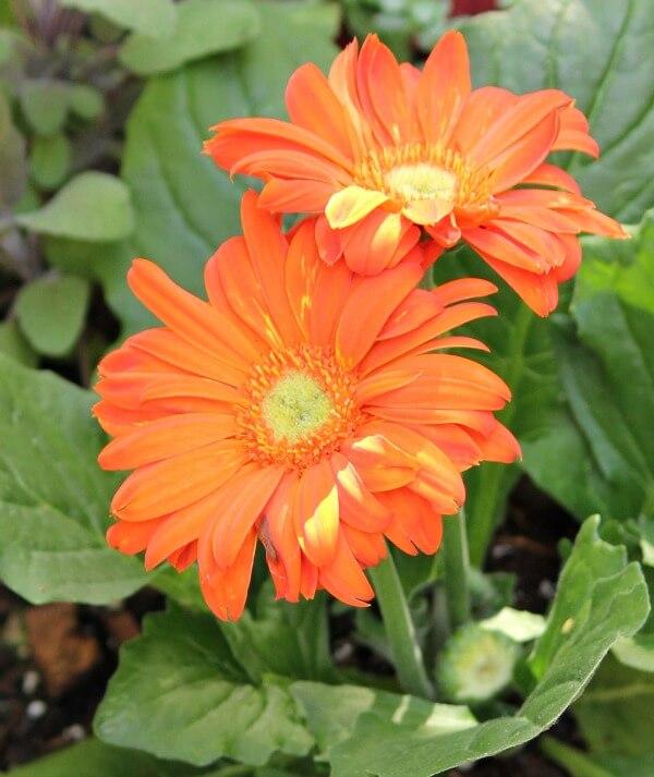 Sunday On The Patio & Water Gardening