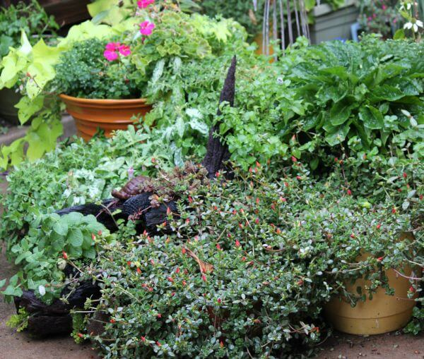 Gardening: What Worked Last Year & Plans For This Year