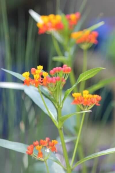 Butterfly Bush Blooms & Happy Birds