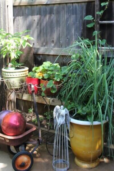 Patio Garden Update