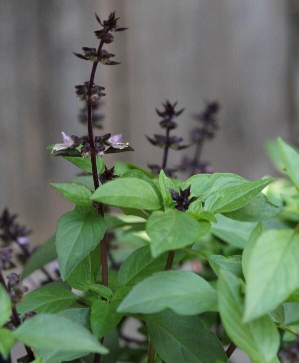 5 Frugal & Natural Garden Tips