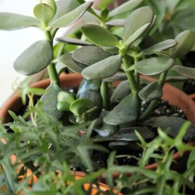 Proper Humidity For House Plants