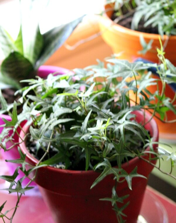 I Know That The Air Is Dry In My Apartment, So I Need To Find Ways To Keep  The Plants Healthy And Thriving.