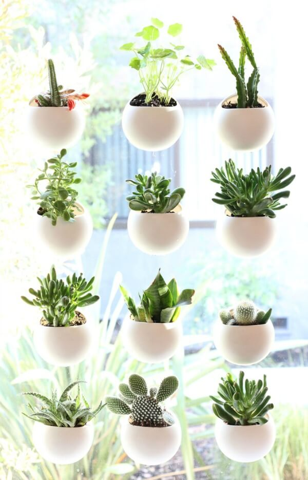 Small Space House Plant Display Ideas - Cozy Little House