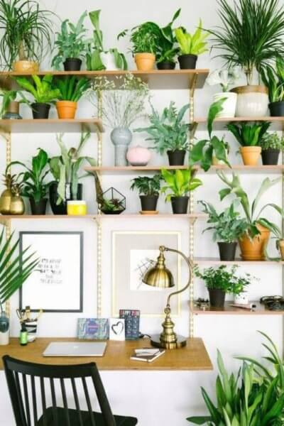 Small Space House Plant Display Ideas
