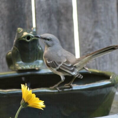 Action At The Bird Bath