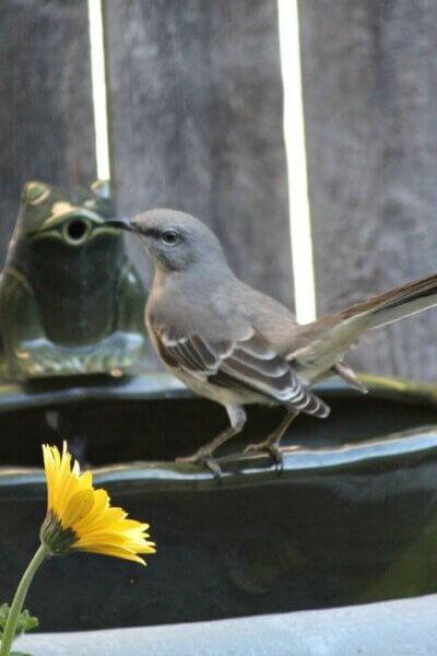 Action At The Bird Bath