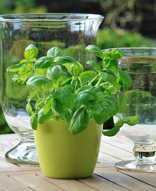10 best herbs to grow indoors year round - Best herbs to grow indoors ...