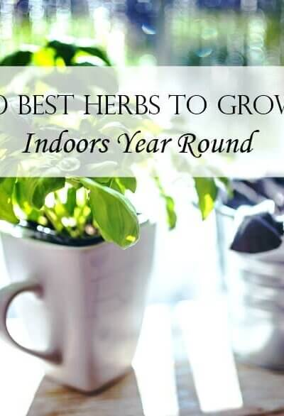 10 Best Herbs To Grow Indoors Year Round