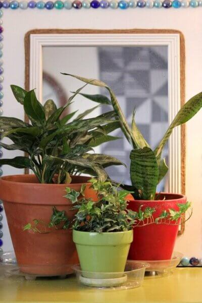 Winter Care For House Plants