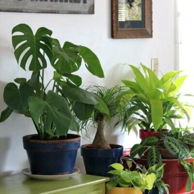 How I Repot House Plants