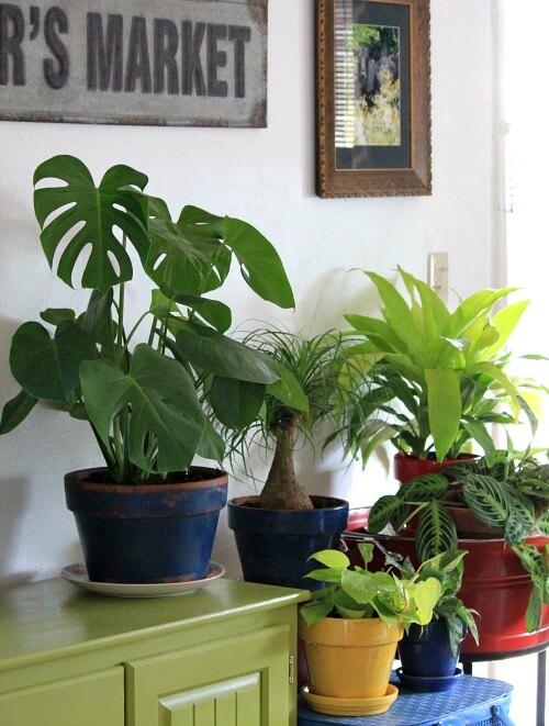 How I Repot House Plants