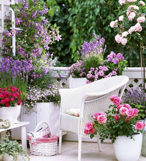 patio roses