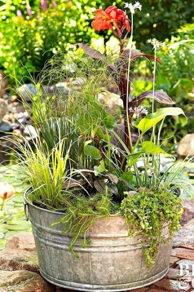 Ideas For Water Gardens