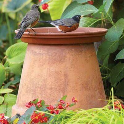 Easy Bird Bath Ideas & Tips