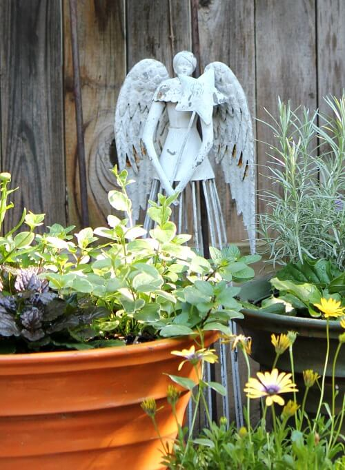 container plants and angel