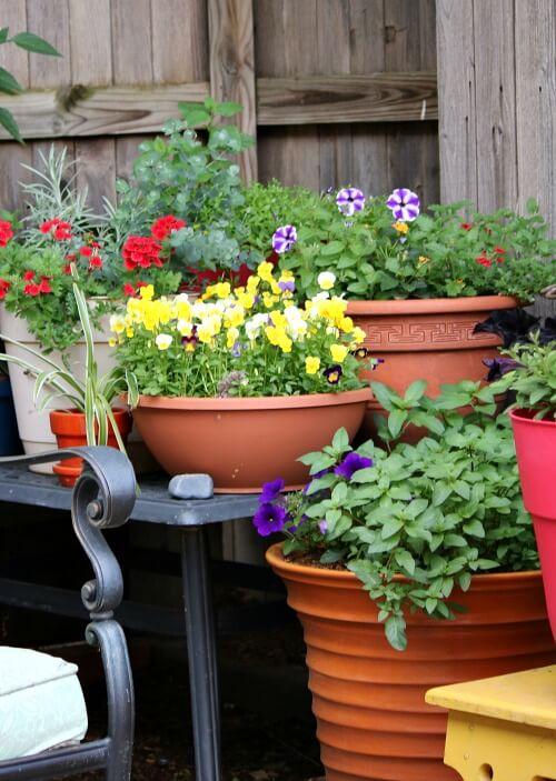 plants in corner