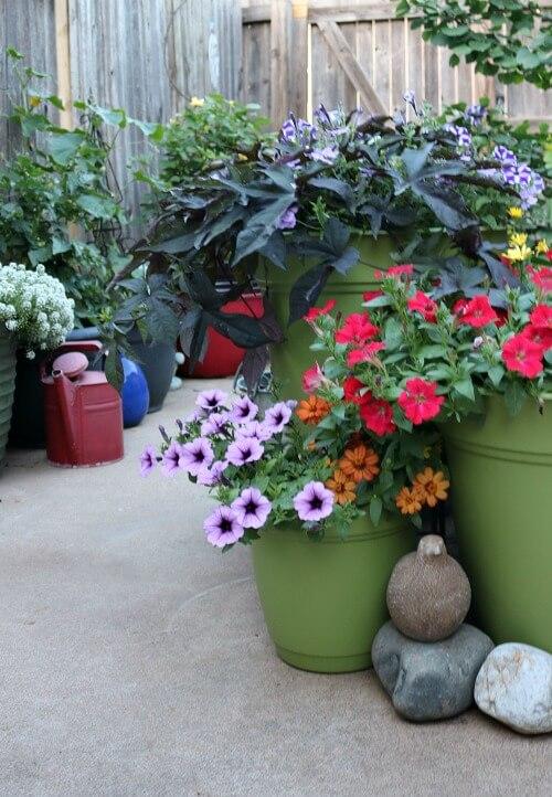 my patio flowers