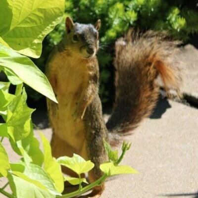 A Squirrel, Another Vet Visit & Fried Green Tomatoes