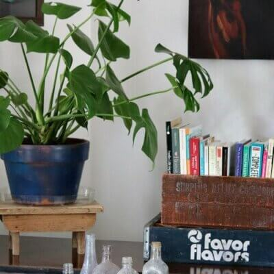 plant in my living room