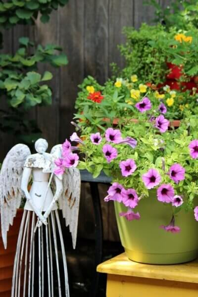 purple petunias and angel