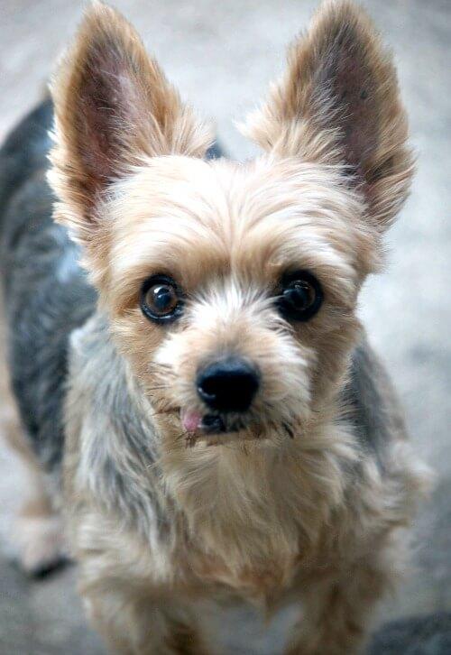 My dog Charlie