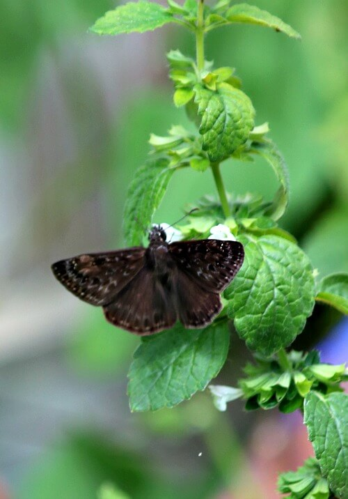 Black butterfly on plant