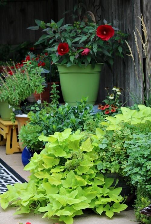 Patio container plants