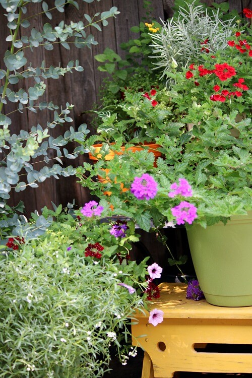 My patio garden container plants