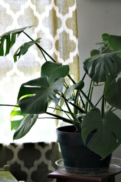 House plant in my bedroom