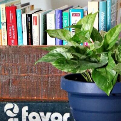 Books in vintage box with house plant