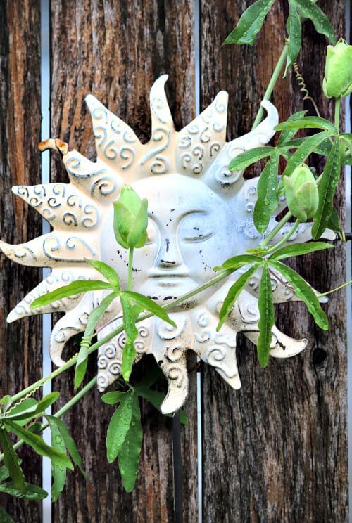 Passion vine against a star sculpture