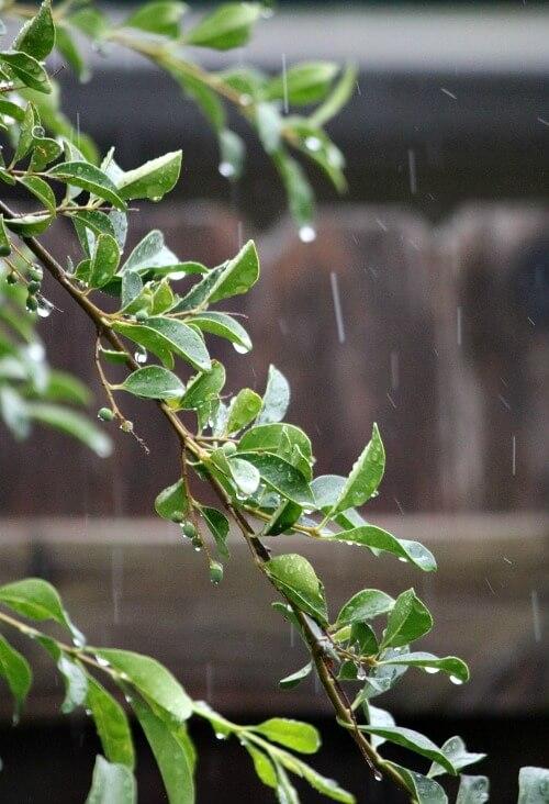 Rain falling on my patio