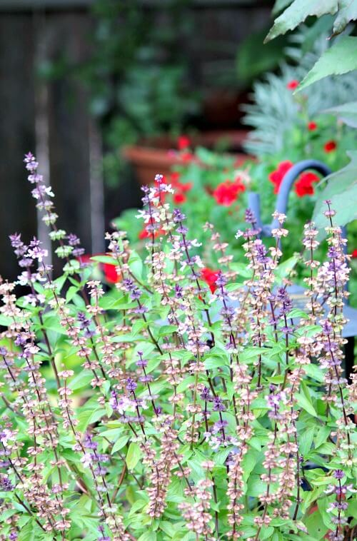 Patio container flowers in September