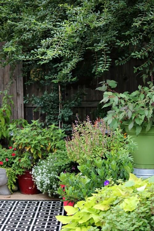 My patio container garden